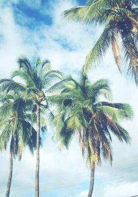 Почивка в Коста Брава - хотел Maria del Mar  ****
